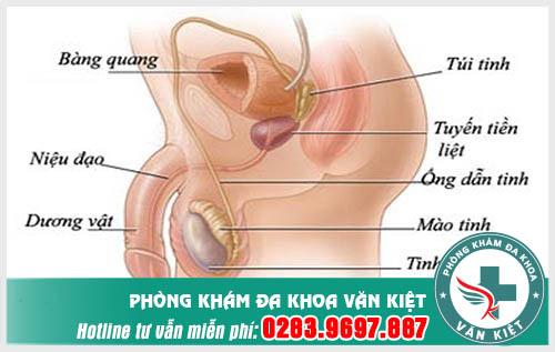 Các bệnh ở bộ phận sinh dục nam