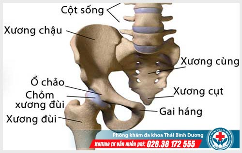 Tự nhiên bị đau xương cụt nguyên nhân do đâu?
